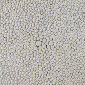 Dover White Faux Shagreen (DVR)